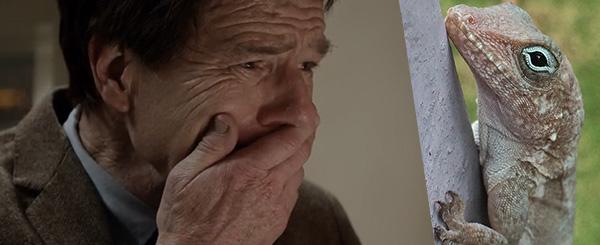 """Captura de Bryan Cranston en """"Godzilla""""... y una foto de un lagartijo, que no tiene absolutamente nada que ver con todo esto."""